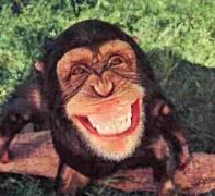 happy-monkey.jpg